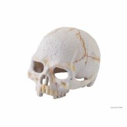 Primate Skull small