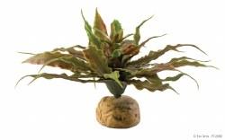 Desert Plant Star Cactus
