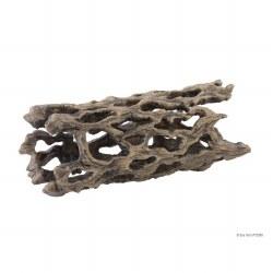 Cholla Cactus Skeleton, Med