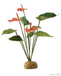 Anthurium Bush Plant