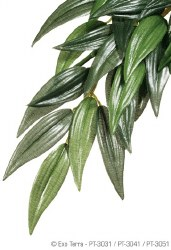 Silk Plant Ruscus Small