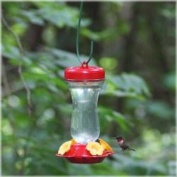 Top Fill Glass Hummingbird Fdr