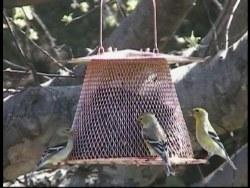 No/No Bird Feeder