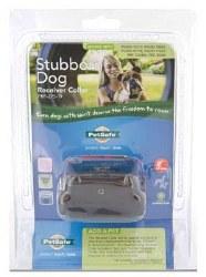 In-Ground Collar Stubborn Dog