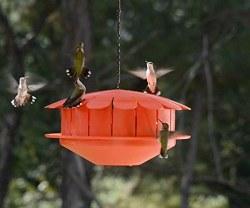 Humm Bug Humming Bird Feeder