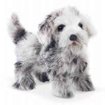 Puppet Shih Tzu Puppy