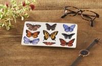 Butterfly Study Trinket Dish