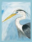 Great Blue Heron Card