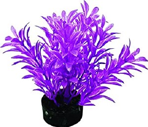 Exotic Mini Plant Neon Purple
