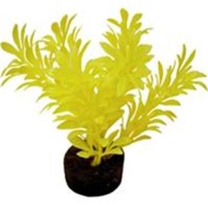 Exotic Mini Plant Neon Yellow