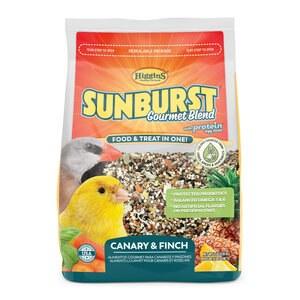 Sunburst Canary Finch 2#