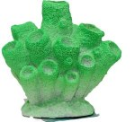 Green Sponge Coral