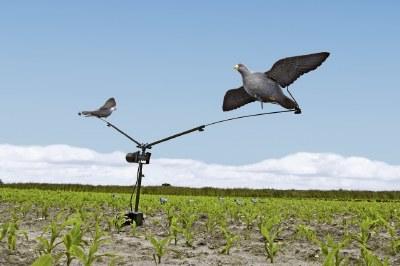 Seeland Pigeon Compact Carousel
