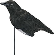 Flocked Electronic Calling Crow