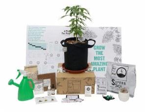 A Pot For Pot Small Complete Cannabis Grow Kit (2 gallon)