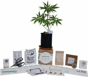 A Pot For Pot Mini Complete Cannabis Grow Kit (1/2 gallon)
