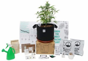 A Pot For Pot Medium Complete Cannabis Grow Kit (5 gallon)