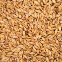 Canadian Honey Malt - 20L (per lb)