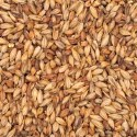 50L American Special Roast Malt (per lb) - Click To Customize