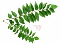 Curry Leaf - Ea