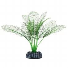 BETTA LACE PLANT