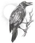 Tattoo Raven
