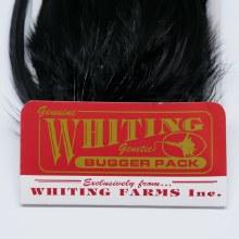 Whiting Bugger Pack Cinnamon
