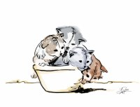 Kittens in a Bowl Card