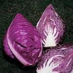 Cabbage Gilson F1