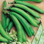 Thompson and Morgan Broad Bean MedesBee Friendly Plants