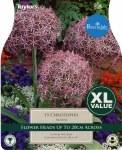 Allium Christophii 15Pk