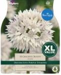 Allium Graceful Beauty 18 bulb