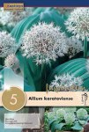 Allium Karataviense 5 pk