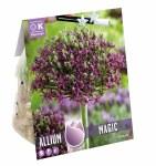 Allium Magic 6 Bulbs