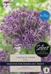 Allium Metallic Shine 5 Bulbs