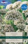 Allium Nigrum 5 Bulb