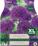 Allium Purple Sensation 15Pk