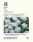 Ammi majus 'Graceland' (National Trust)