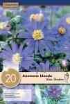 Anemone Blue Shades 20 bulbs