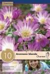 Anemone Charmer 10 bulbs