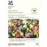 Aquilegia x hybrida 'McKana Giants Mixed' (National Trust)