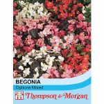 Begonia semperflorens 'Options Mixed'