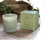 Herb Dancing Daffodils Boxed Candle