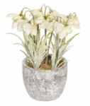18cm Frosted Snowdrop Pot