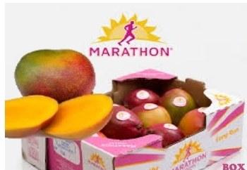 Marathon Mango Kent Box
