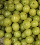 AMLA/ INDIAN GOOSEBERRY FRESH (PHYLLANTHUS EMBLICA)