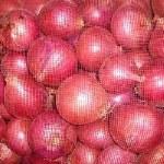 FRESH RED ONIONS BULK 50 LB