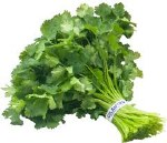 Fresh Cilantro - Sold by Bunch