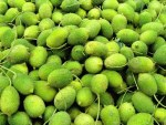 Fresh Kantola - Kankoda - Sold by Weight - Pound