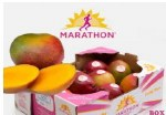 MARATHON ATULPHO MANGO BOX 18 COUNT (SOLD BY BOX)